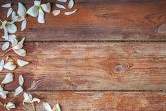 与白色秋天花的背景 免版税库存图片