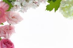 与白色紫丁香属植物和淡粉红的花的花卉背景 库存图片