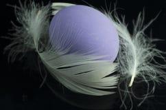 与白色羽毛的紫色鸡蛋 免版税库存图片