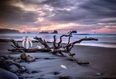 与白色翼的天使在与一个动物的沙滩在日落 库存图片