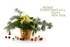 与白色苞的盆的一品红大戟属pulcherrima, 12月 图库摄影