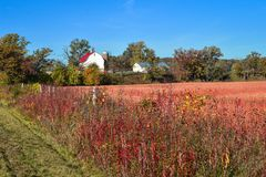 与白色谷仓的美好的秋天农厂场面 免版税库存图片