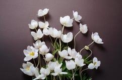 与白色银莲花属的创造性的顶视图布局在黑背景开花 最低纲领派背景 免版税库存照片