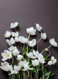 与白色银莲花属的创造性的顶视图布局在黑背景开花 最低纲领派背景 库存图片