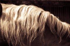 与白色鬃毛的美丽的棕色马 免版税库存图片