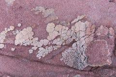 与白色水晶的红色水成岩表面上 免版税库存图片