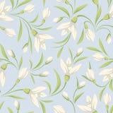 与白色snowdrop的无缝的样式在蓝色背景开花 也corel凹道例证向量 免版税图库摄影