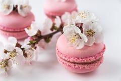 与白花分支的桃红色蛋白杏仁饼干关闭  库存图片