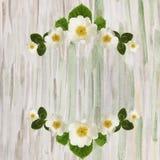 与白花和叶子的框架狂放在水彩b上升了 免版税库存图片