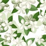 与白花的无缝的背景。 库存例证