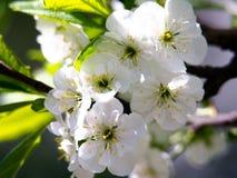 与白花的春天季节性背景,与拷贝空间的自然复活节花卉图象 库存图片