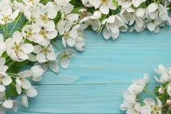 与白花的春天背景在蓝色木背景进展 顶视图 图库摄影