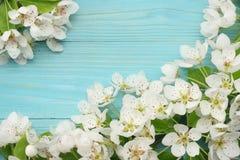 与白花的春天背景在蓝色木背景进展 顶视图 免版税图库摄影