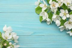 与白花的春天背景在蓝色木背景进展 顶视图 免版税库存图片
