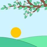 与白花的树枝和日出环境美化 库存图片