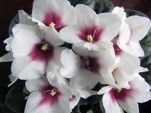 与白花的花卉背景 库存照片