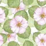 与白花2的精美花卉无缝的样式 免版税库存图片