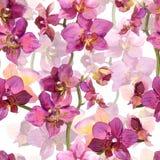 与百合兰花花的无缝的花卉模板 库存照片