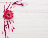 与百日菊属花的背景 库存照片