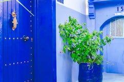 与的两个蓝色门在他们之间的植物 图库摄影