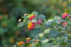 与的壮观的花活泼的颜色-正面图 免版税库存照片