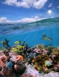 与的天空和水下美丽的珊瑚礁的分开的视图 免版税库存照片