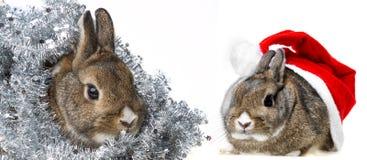 与的愉快的圣诞节卡片小的兔子 免版税图库摄影