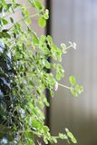 与的新鲜的自然卷曲花绿色叶子 库存图片