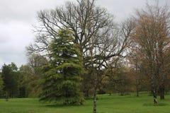 与的树离开 库存图片