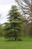 与的树离开 免版税库存照片