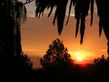 与的棕榈和没有其他的树的日落 2 免版税图库摄影