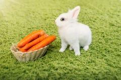 与的滑稽的兔子红萝卜 免版税库存图片