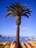 与皮船的棕榈树在基地 免版税图库摄影