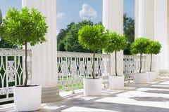 与盆的植物的白色夏天大阳台在栏杆附近 庭院视图 库存照片