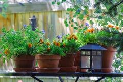 与盆的花和灯笼的一张桌 库存照片