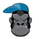 与盖帽的恼怒的大猩猩 免版税库存图片