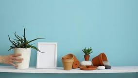 与相框大模型的现代室装饰 白色架子对有瓦器和多汁植物的淡色绿松石墙壁 ? 股票视频