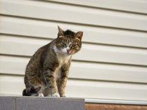 与看在照相机的嫉妒的一只坚韧街道猫 库存照片