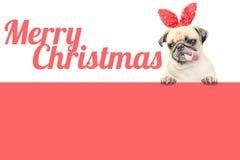 与看容易的文本的红色圣诞节帽子耳朵的逗人喜爱的哈巴狗小狗去除与在桃红色横幅上的词圣诞快乐 免版税库存图片