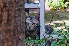 与看的眼睛的一只猫 库存照片