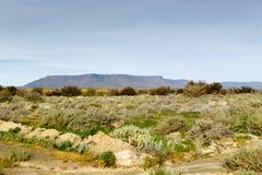 与看起来的桌山的山的绿色Fileds 免版税库存图片