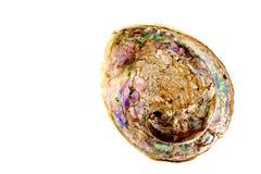 与真珠色的衬里的鲍鱼半壳 免版税库存图片