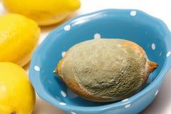 与真菌的被损坏的柠檬在白色背景 免版税库存照片
