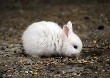 与眼睛的白色小兔子 库存图片