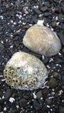 与眼镜的蛤蜊 图库摄影