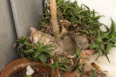 与睡觉在地面上的妈咪的小猫 免版税图库摄影