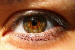 与睫毛的女性人的绿色棕色棕色眼睛 免版税库存照片