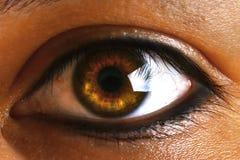 与睫毛的女性人的绿色棕色棕色眼睛 免版税库存图片