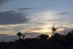 与矮棕榈条树、云彩和死的树的日出 免版税库存照片