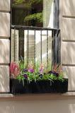 与石南花花和蝴蝶花的窗槛花箱 库存照片